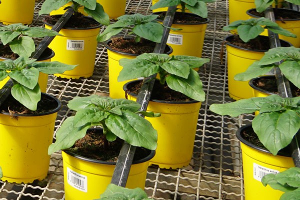 Plantas en maceta con Código EAN13 y código QR