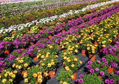 Flors Noé Germans