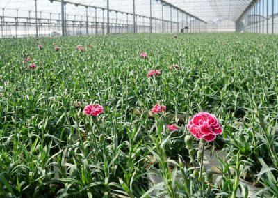 Floricultura Llorenç Vila