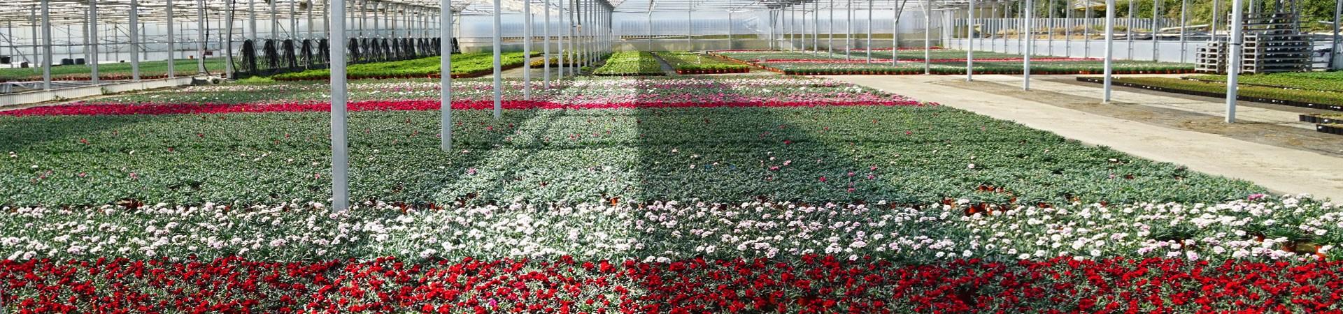 Plantas de calidad del Maresme