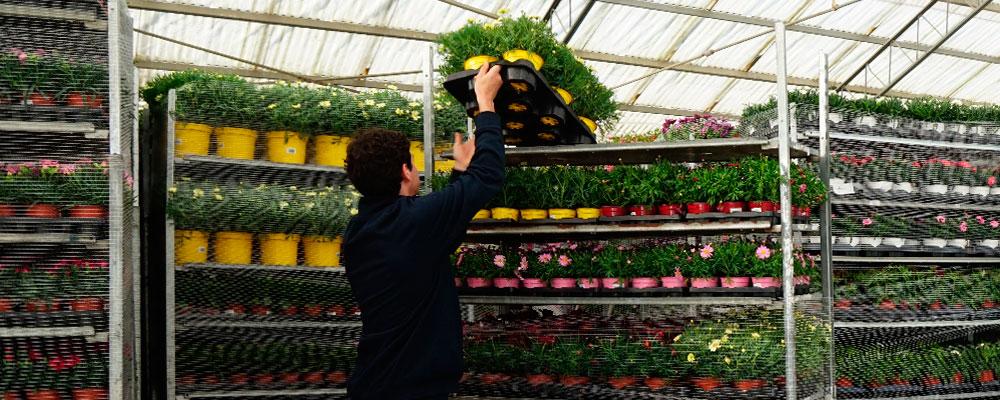 Asociación de Comercializadores de Planta Ornamental